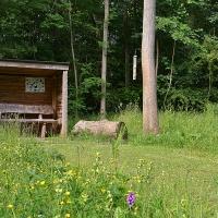 Meadow_summer