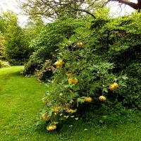 The_Garden_summer