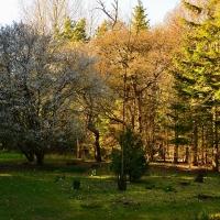 Timber_ride_spring