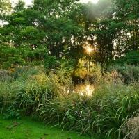 pond_summer2