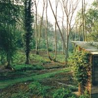 Ash Beds 1999