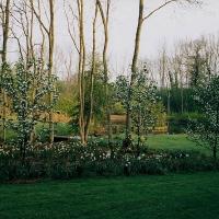Pond 1999