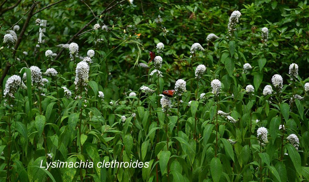 woodland_garden_nature564687