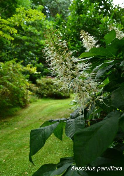 woodland_garden_908