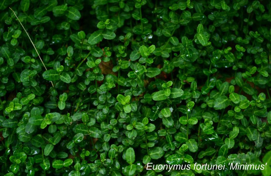 foliage_tree_nature_dasf