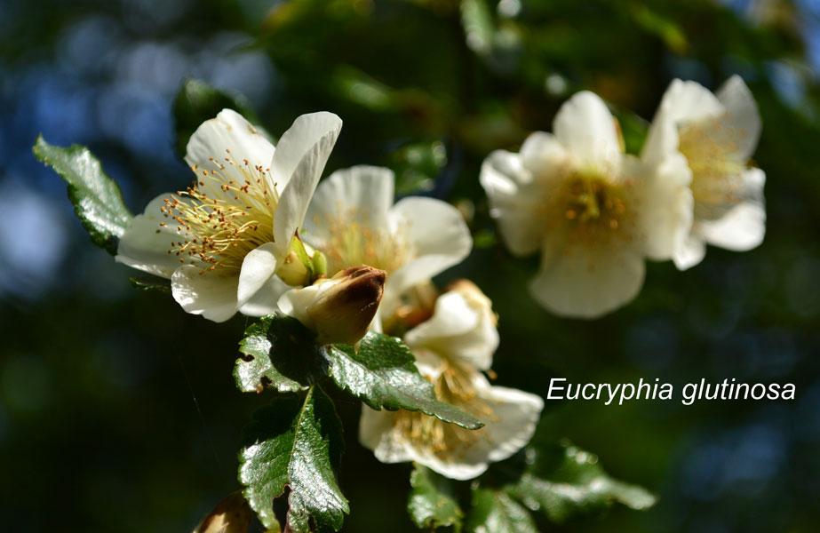 woodland_plant477