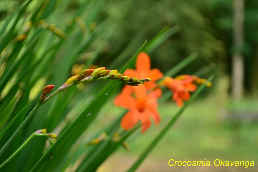 nature_orange_flower_woodland45