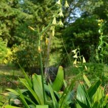 woodland_nature_garden978