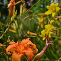 orange_yellow_flower