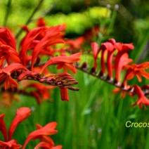 red_flower_garden_5467