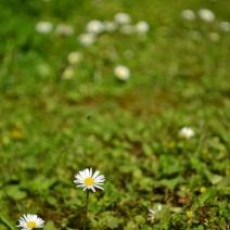 garden_32423