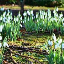 spring_flower_dsf