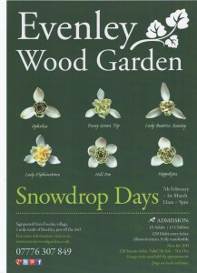 Snowdrop_Poster